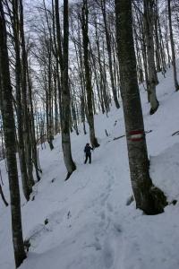 Ultimo tratto nel bel bosco