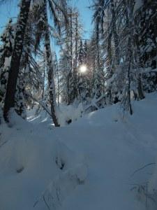 Il sole comincia a filtrare tra gli alberi