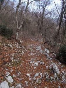 Sentiero CAI 982