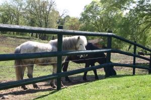 I cavalli sul colle