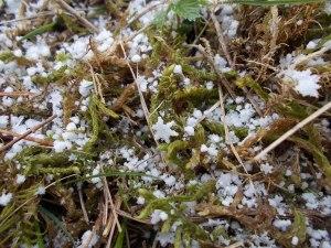 La neve e le sue forme