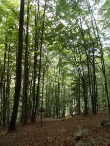 Veloci nel bel bosco