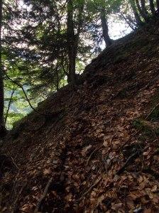 Tagliando lungo una traccia nel bosco