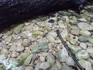 Piccole salamandre crescono