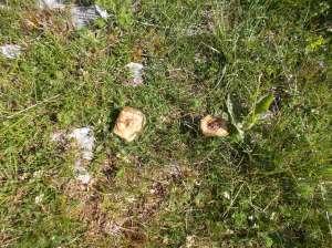 E dopo tante piogge, anche i funghi!