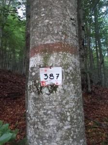 Vecchi segni del 387