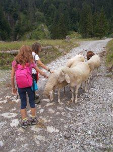 Pecore morbidose