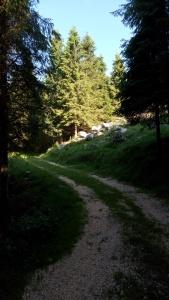 Nel bel bosco verso il Masonil Vecio