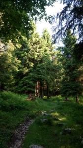 Il bel bosco