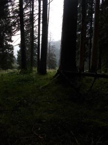 Riparato sotto alte conifere