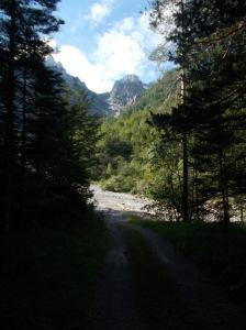 Nel bosco verso il Rio del Lavinale