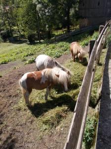 Pony in Pralongo