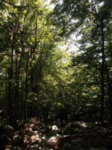 Nuovamente nel bosco, fuori traccia come sempre