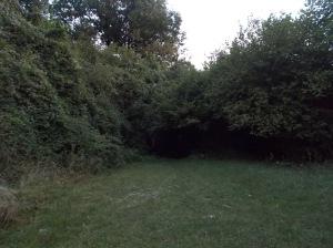 Entrando nel buio del bosco
