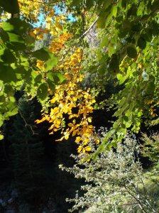 Inizio d'autunno