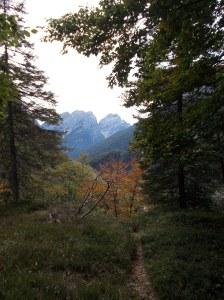 Nel bosco della valle