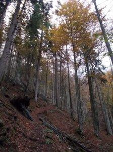 Sentiero CAI 506 nel bel bosco