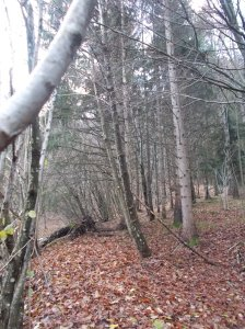 Il bosco muta spesso