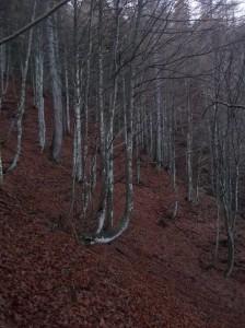 Ultimo tratto di bosco