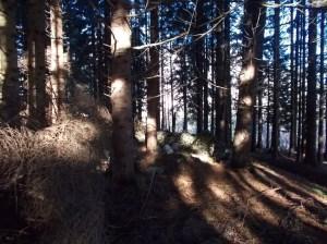 Fra gli alberi i ruderi di una casera