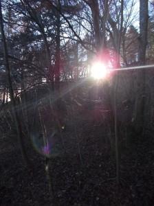 Il sole fra gli alberi