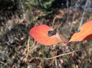Rosso sulle foglie