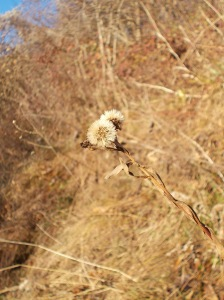 Ecco l'autunno inoltrato