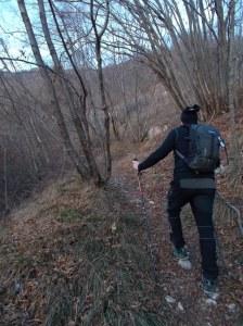 Il sentiero che porta a casera Palussa