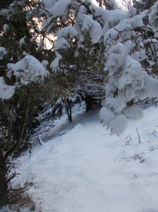 Nella neve verso casera Busa Bernart